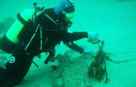 diver_seaweed